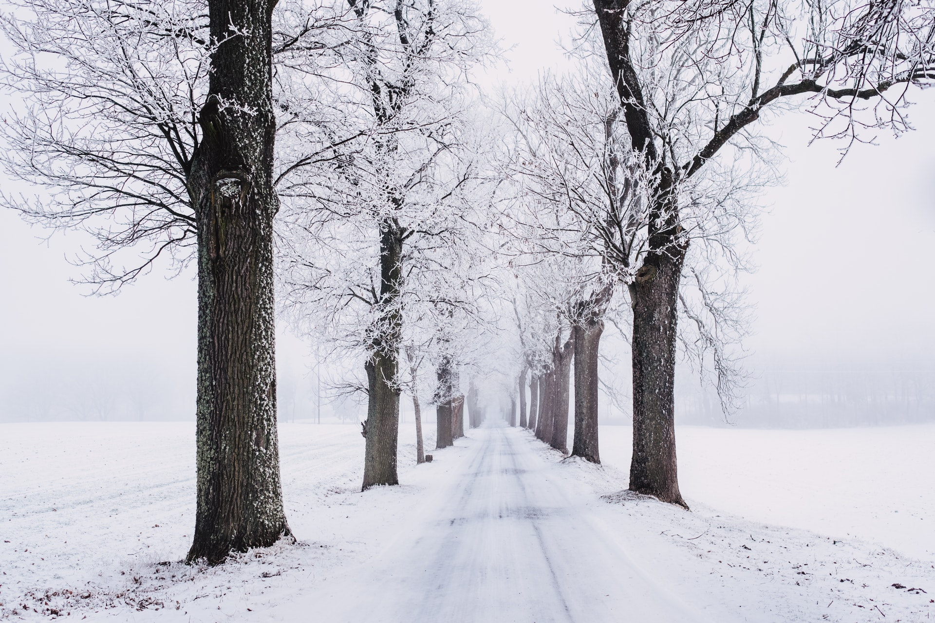 snowy-pathway-surrounded-by-bare-tree-839462